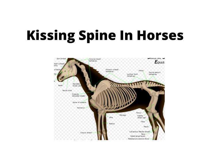 Kissing Spine In Horses