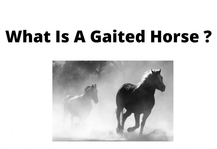 What is a gaited horse